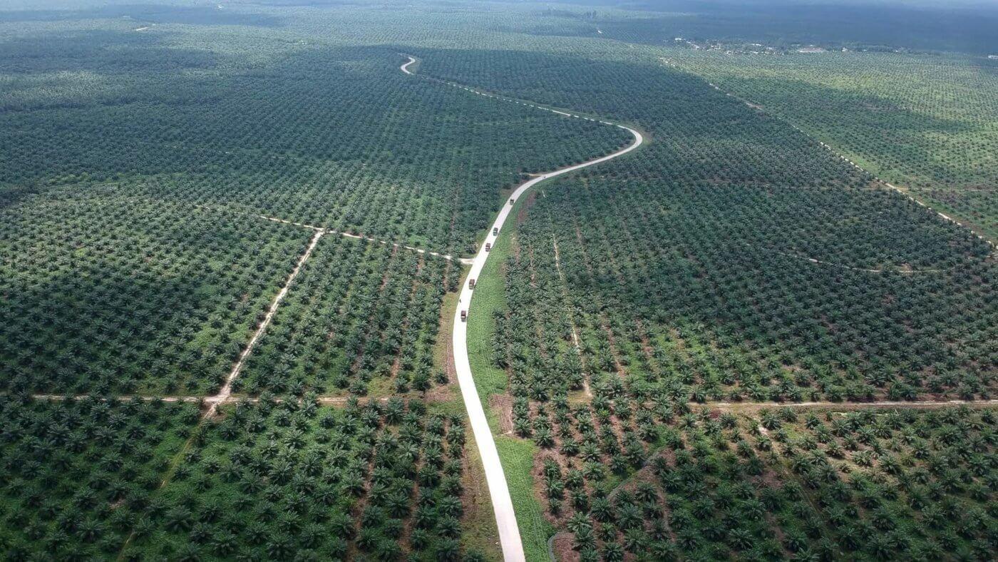 Digital agriculture meets plantation management – 30MHz